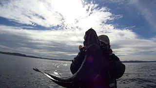 В баренцево море рыбалка форум