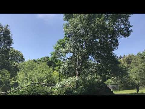Giant Oak Branch Almost Kills Chef John!