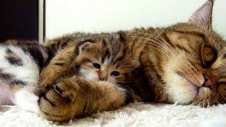 Mom Cat hugs her kitten Rocky. Mommy, Mommy, Hug Me ! AWW