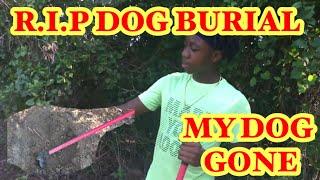 HOW TO BURY A DEAD DOG