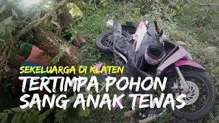 Satu Keluarga di Klaten Tertimpa Pohon saat Angin Besar, Bocah 6 Tahun Meninggal di Tempat
