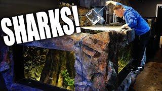 I GOT SHARKS!! Secret fish for 2,000G aquarium  - The king of DIY