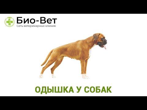 Одышка у Собак 🐕 - Причины и Лечение // Сеть Ветклиник БИО-ВЕТ