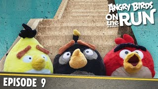 Angry Birds On The Run | The Stairs Challenge   S1 Ep9