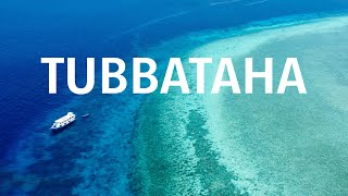 Tak wyglądały morza 300 lat temu – Tubbataha [4K]