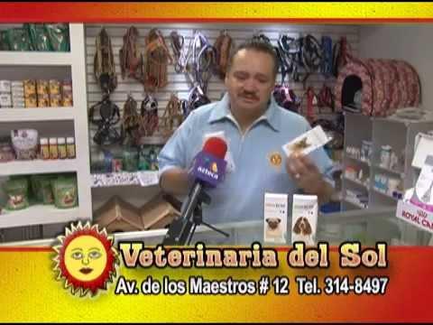 Veterinaria del Sol - Protección contra pulgas y garrapatas