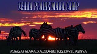 Zebra Plains Mara Camp Promotional Clip #2 | Maasai Mara Safari