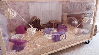 CLEANING MY HAMSTER CAGES + UPDATES