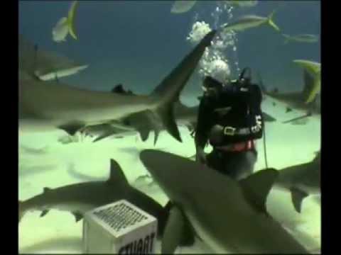Video of Oceanus
