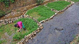 ลุยเวียดนาม(Vietnam) EP113:บรรยากาศยามเช้าบ้านเผ่านุง  เก็บผักน้ำ วิถีชีวิตชาวนุง