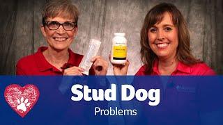 Stud Dog Problems: Pet Care Pro Show