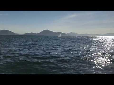 Projeto Baleias e Golfinhos do Rio de Janeiro: É PRIMAVERA!