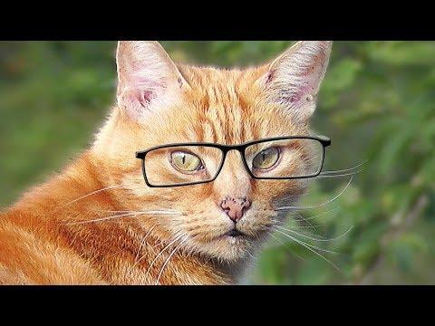 Videos für Katzen Zum Spielen : Katze Fernsehen - Katze Beobachten Vögel