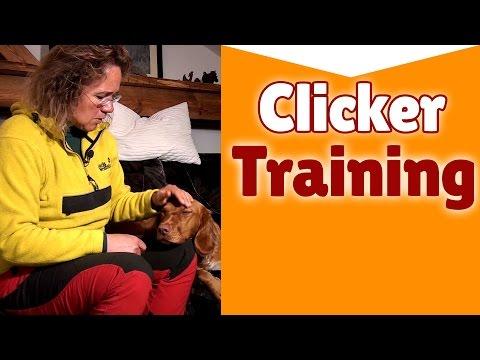 Clickertraining für Hunde - Steffi spricht über Clickertraining für Hunde - Keine Anleitung