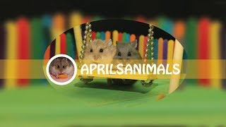 Welcome to AprilsAnimals Youtube Channel by AprilsAnimals