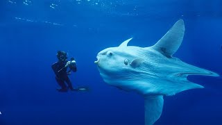 What Animals Lives At The Bottom Of The Mariana Trench?