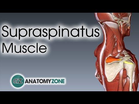 Linstallation pour lentraînement des muscles du vagin
