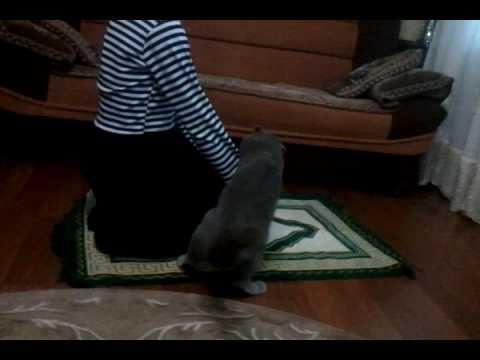 Кот и намаз