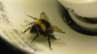 THERE'S A BEE IN MY ROOM!!!!
