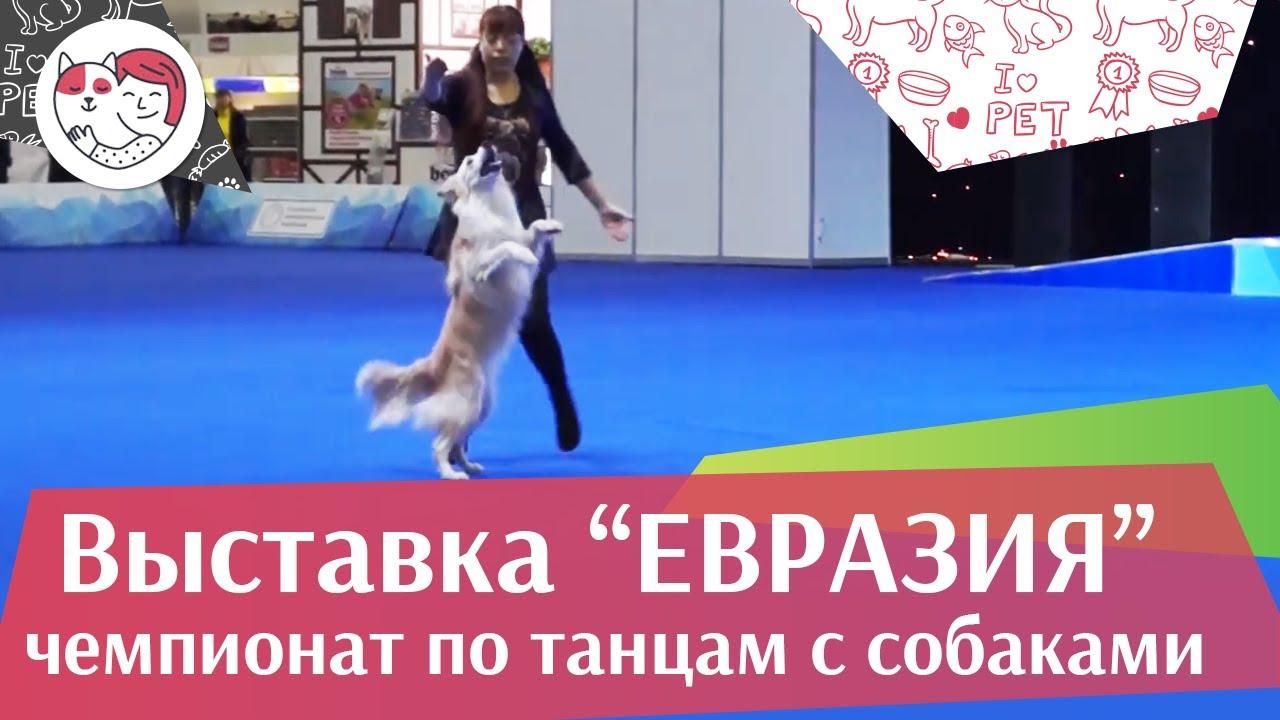 Чемпионат РКФ по танцам с собаками 1 на Евразии 17 ilikepet