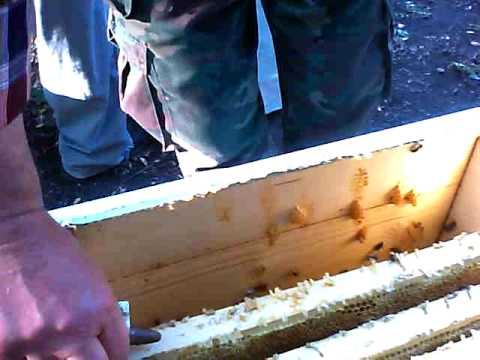моя пасека (пчеловождение без роения)