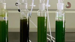 Ciência SP   Produção de bioplástico a partir de CO2