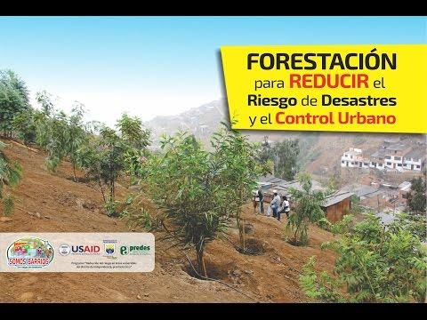Proceso de forestación en ladera de cerros en Independencia
