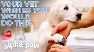 3 Things Your Vet Wishes You Would Do!