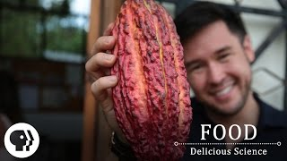 FOOD – DELICIOUS SCIENCE | Food on the Brain | Preview | PBS Food
