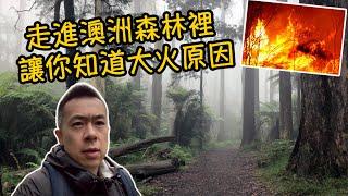 澳洲大火 帶你走進澳洲的原始森林你就會明白為什麼澳洲容易着火了!