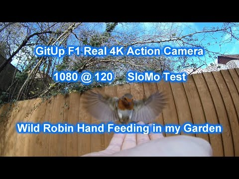 gitup-f1-camera-test-slow-motion--hand-feeding-wild-garden-robin