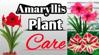 Amaryllis Plant Care & Propagation | Amaryllis | Hippeastrum | Bulbous Plant | Plants And Craft