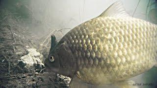 Приманка для рыбы кубики