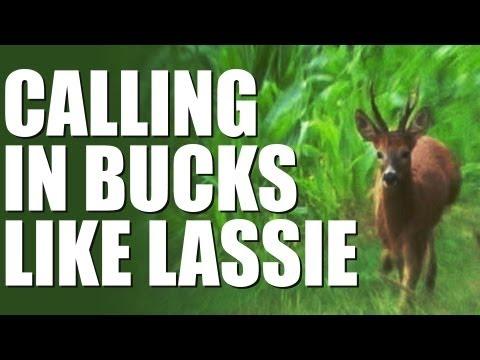 Fieldsports Britain – Calling in bucks like Lassie