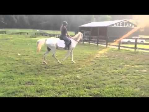 Jake Fiddy, an adopted Appaloosa in Huntington, WV_image-1