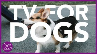 Christmas TV For Dogs - 8 Entertaining Hours of Dog TV!