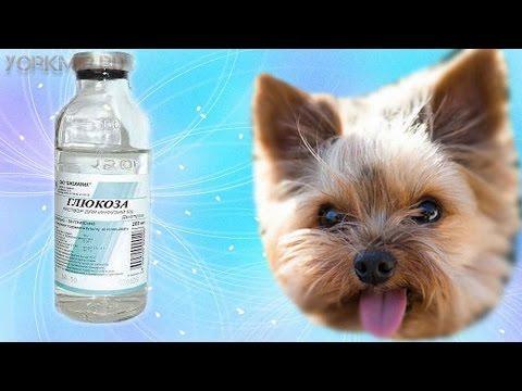 Гипогликемия у собак | Причины | Первая помощь.