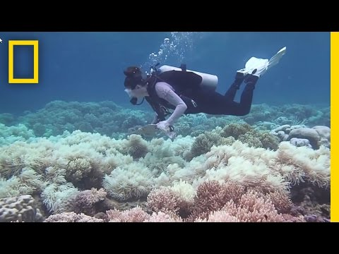 Odumírání Velkého korálového útesu