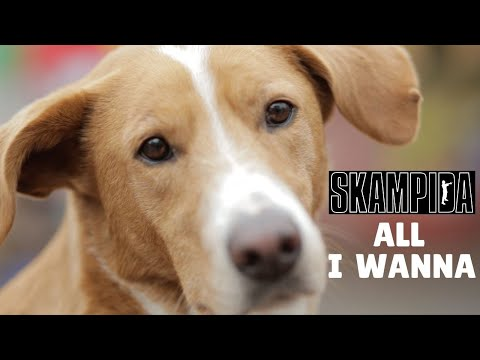 SKAMPIDA- ALL I WANNA (OFFICIAL VIDEO)