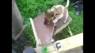 Die besten 100 Videos Wenn ein Ingenieur einen Hund besitzt sieht das so aus - This is what happens when an engineer owns a dog