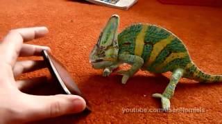 Хамелеон и iPhone