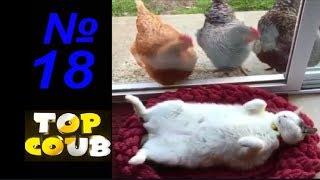 Смешные видео.Приколы с животными. №18