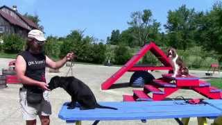 Training Your Labrador Retriever Part 2