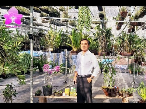 Anh Nguyễn Ngọc Hà Rút Ruột Rút Gan Bí Quyết Ươm Keiki, Đặc Tính Sinh Lý Của Lan [HOALANTV]