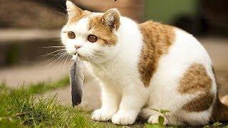 Смешные коты, кошки и другие животные (funny cats) – НЕ РАЗРЕШАЕТСЯ СКУЧАТЬ, ПО НАСТОЯЩЕМУ ВЕСЕЛО