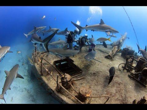Bahamas Diving Trip 2016