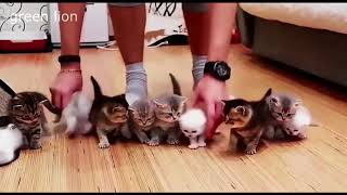 Funny Cats Vine Compilation - Best Humor Cat Videos 2018