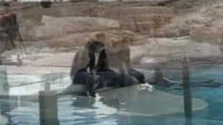 Bada Med Delfiner