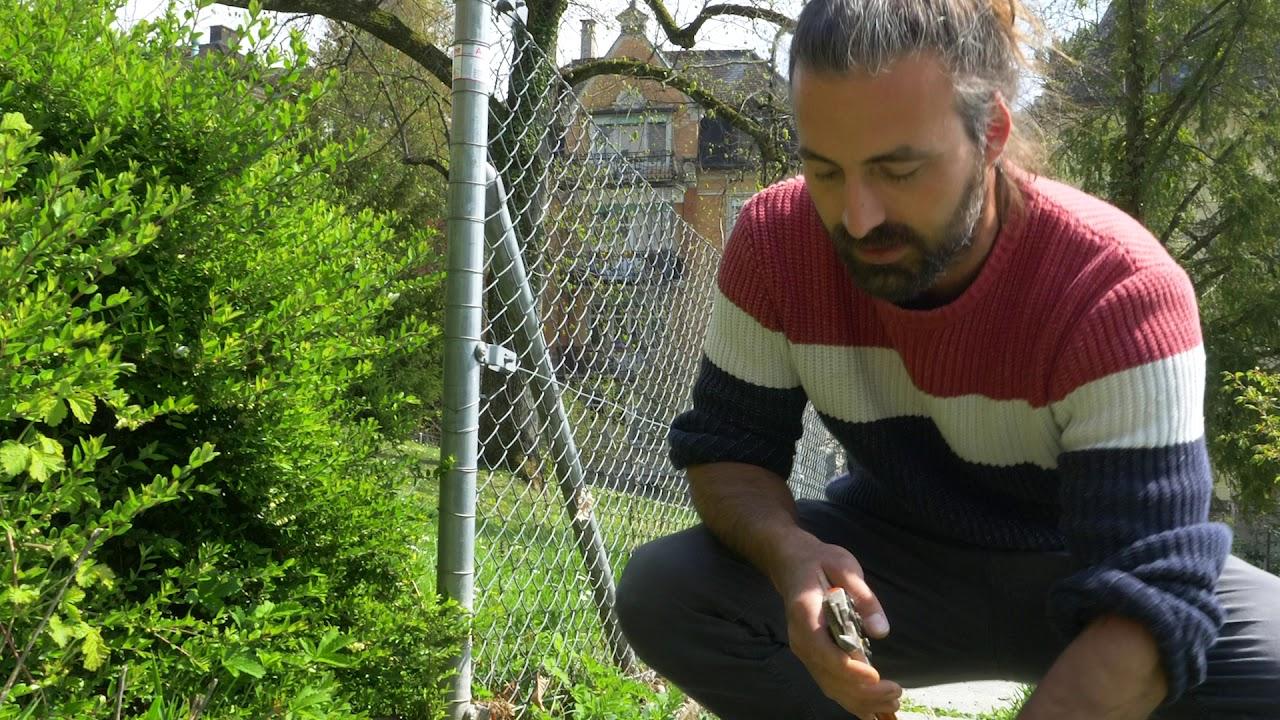 Wie fördere ich mit markhaltigen Stängel einheimische Wildbienenarten?