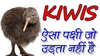 Amazing Facts About Kiwi Bird In Hindi ऐसा पक्षी जो उड़ता नहीं है | Adbhut Rahasya
